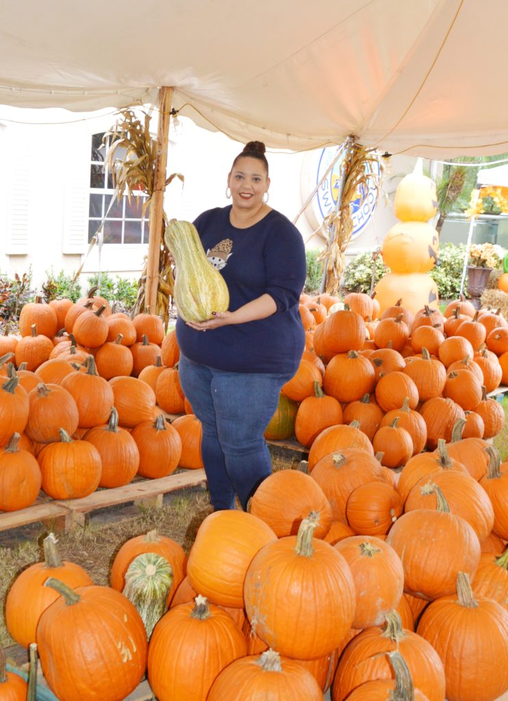 pumpkin in patch in Tampa